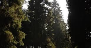 Gdyński radny Platformy Obywatelskiej Arkadiusz Gurazda poprosił o pomoc swojego partyjnego kolegę - wiceministra rolnictwa ... - 156245-Trojmiejscy-mysliwi-chca-przejac-piekne-lasy-pod-Zarnowcem