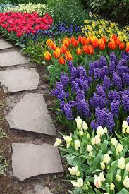 best 20 spring garden ideas on pinterest spring flowers dream