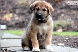 Embry the Pup Images?q=tbn:ANd9GcRtl524eg-suknvDOmkmR5vSFT8mAMA6jXsa91kC-3t1I_8yKZbxw