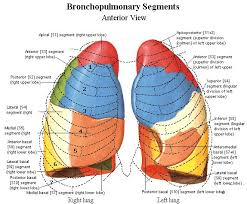 Anatomy And Physiology Of Lungs 135 Best Anatomy And Physiology Images On Pinterest Human