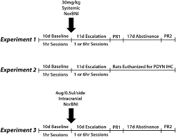 κ opioid receptors in the nucleus accumbens shell mediate