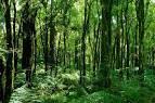 ต้นไม้ในป่าดิบชื้น พืชเขตร้อน กาฝากกับต้นไม้ รากพูพอน ป่าดิบ
