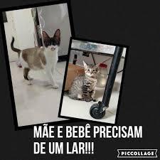 Gata e gatinha buscam um lar amoroso no Jardim Paulista, em SP ...
