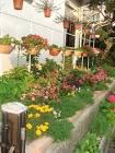 จัดสวนในพื้นที่จำกัด : สไตล์ญี่ปุ่น - GotoKnow