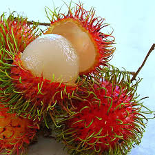 images?q=tbn:ANd9GcRvPAPuZWB9nmHhDegADyXb8NBLHc19yZRydNP0WACoizWoqRUtpLcAUUIaog - Philippine Fruits - Philippine Photo Gallery