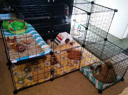need some ideas or inspiration for building your own indoor rabbit