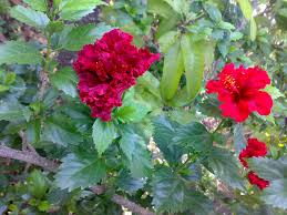 Flowers Plants by Why Is There Different Types Of Flowers In The Same Branch Of