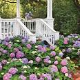 Change Your Hydrangea Color - Southern Living