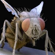 admit it, you kind of want to hug this fly.
