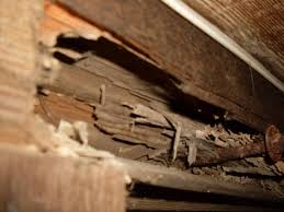 pre purchase property inspections adelaide termite damage to sub