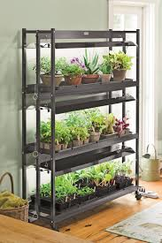 successfully transition houseplants indoors for winter growing