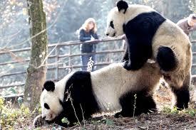 OMSI Brewpub on Panda Speed dating Monday        pm