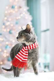 Castles Crowns And Cottages by Merry Christmas Love The Cats Love And Olive Oil