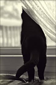 99 best u003d u003d in window images on pinterest window kitty cats
