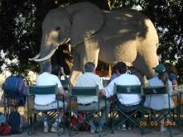 Zimbabwe   Tailormade Safaris Day