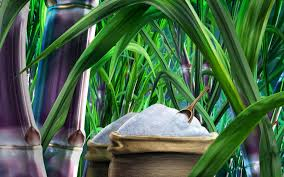 sugarcane wallpaper hd sugarcane wallpaper worlds greatest art