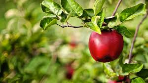 cider course workshop Professional and Continuing Education   Oregon State University