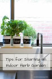 starting herb garden