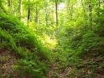 Kentucky's State Forests | Tygarts State Forest