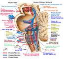 Noyaux des nerfs crâniens : noyaux sensibles