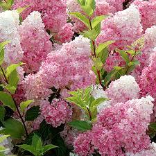 aliexpress com buy marseed 50pcs indoor flower plants vanilla