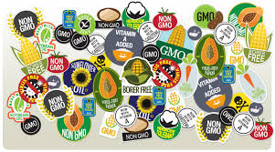 Genetically Modified Organisms  GMOs    Wednesday Night Wednesday Night