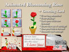 animated blooming rose