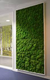 best 25 plants indoor ideas on pinterest plant house plants