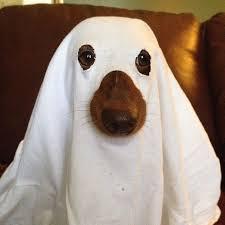 Winnie Pooh Dog Halloween Costume Halloween Costumes Cerberus Fun Advisor