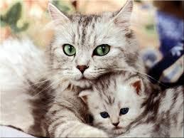 Amor de madre Images?q=tbn:ANd9GcS4As3frNZVn2aVa_n0-0CKZCGwFuJscl8ewYnp6XHNJwQ5wOE&t=1&usg=__n1CpWJhyw7kaYhLrK3xqWPVGpes=