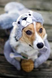 97 best halloween costumes images on pinterest animals pet