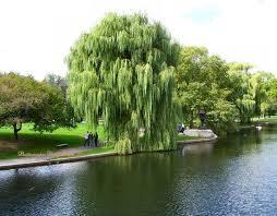 [Super Xịn] Bạn thuộc loại cây gì và bạn là người thế nào? Images?q=tbn:ANd9GcS4PyvHa3aytZ5wPcyx-2c2BgDvFdWtzow9um-xgXcd6GB_hBPW