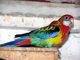 Pet shop ,,Zoo Amazona'' Images?q=tbn:ANd9GcS5B-hAvyA8uCciY74tfz4WYg6qwmWsIGtH0kKiSqJeOyoID1mZ
