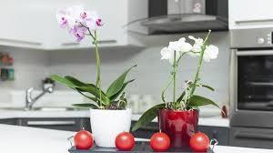 how decorating with red and purple can boost your prosperity