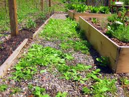 How To Keep Deer Out Of Vegetable Garden by Weeds In Paths Use Vinegar Not Roundup