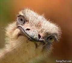 Hello - I'm Emmy Emu