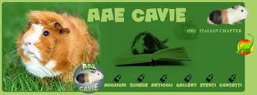 AAE Cavie