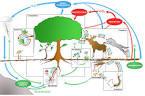R3: Fonctionnement des écosystèmes, N. Mouquet et al. « Regards