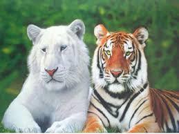 Animales albinos Images?q=tbn:ANd9GcS7gI5NtER8hZr4MboMadLoYIoNrGZ_dnNJ_0nlh75Ag1zViPo&t=1&usg=__dkKJbEfY1hKNG6KzhV_h5SnYKDM=