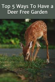 How To Keep Deer Out Of Vegetable Garden by 5 Ways To Have A Deer Free Garden