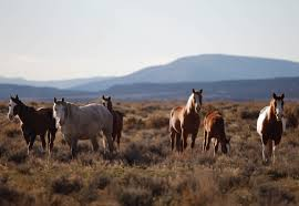 Feds must dismiss unhinged advice on wild horses