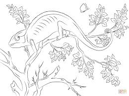 chameleon coloring page chameleon coloring page free printable