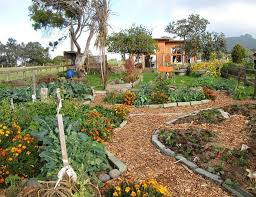 the advantages of permaculture garden wearefound home design