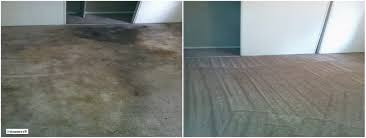 Wall Carpet by Wall To Wall Carpet Cleaning Nyc I Steamers