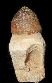 Igdamanosaurus