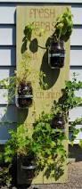 38 best gardening galore images on pinterest gardening plants
