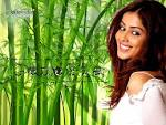 Wallpapers Backgrounds - Genelia Dsouza (wallpapers Genelia Dsouza v album Bollywood Actresses oneindia 1024x768)