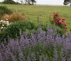 coastal gardening how to garden on the seacoast north coast