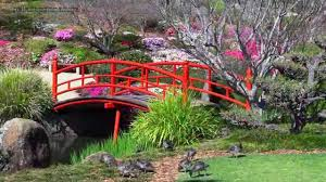 beautiful gardens australia u2022 japanese beauty hd1080p youtube