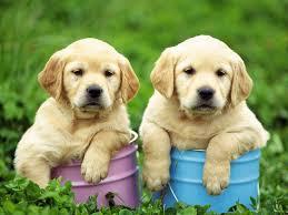 www.aybilgi.net köpekler besin neden gömerler.